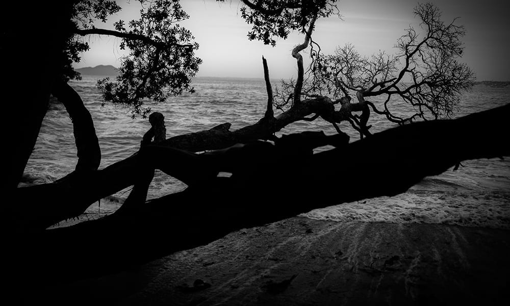 A black and white photo of a woman lying back on a tree by the beach